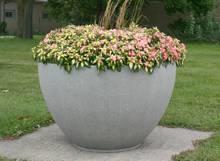 bowl-small